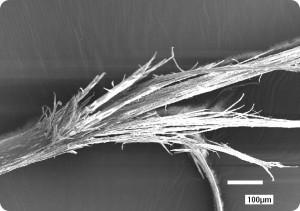 Структура секущегося волоса
